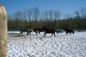 winter play time standardbreds