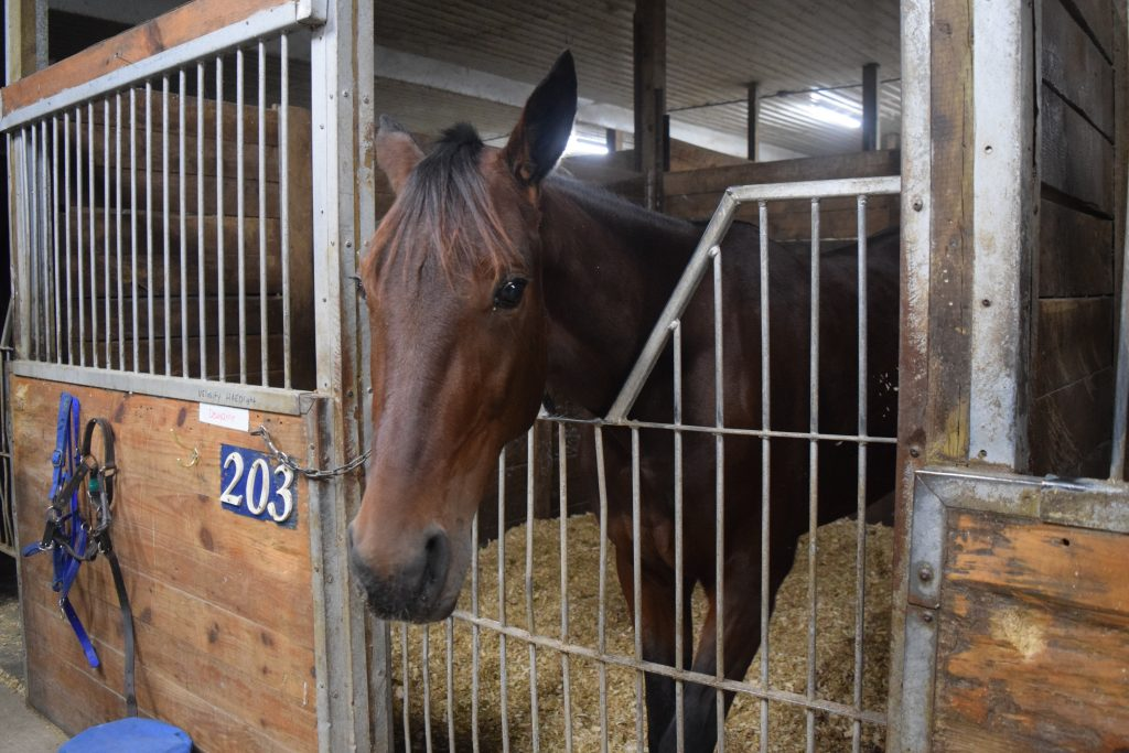 Dewey Ann at the Winter open house 2017 Stable.ca fractional ownership standardbred racing charles davis stables