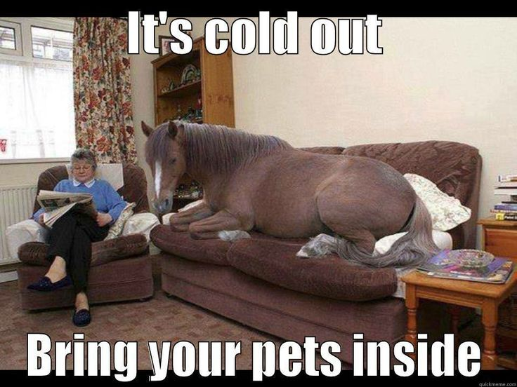 it is cold outside protect your pets